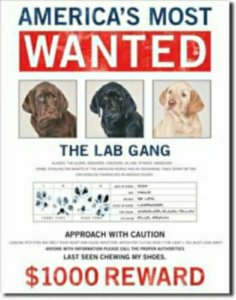 Americas Most Wanted tin sign