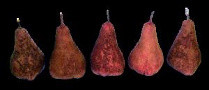 Hand made fabric pears.